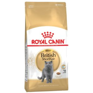 British Shorthair Adult Royal Canin