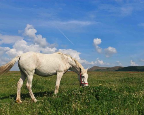 a white horse to graze on green field