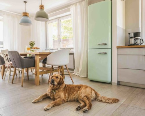Dog next to dining table and chairs under lamps in house interior with pastel fridge. Real photo