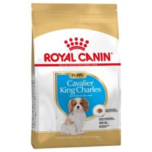 Cavalier King Charles Junior Royal Canin