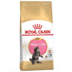 Maine Coon Kitten Royal Canin
